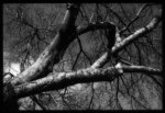 dead tree limbs