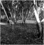 signature trees